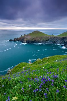 Clifftop Bluebells, Rumps Peninsula, Cornwall, England