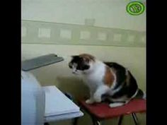 Cat Vs Printer (with the original sound). This is probably one of my favorite cat videos ever.
