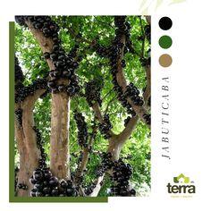 En #TerraPradosYJardines te damos la asesoría necesaria para que tus árboles frutales se mantengan vigorosos y den fruto. #TerraPradosyJardines #MantenimientodeJardines #Jardín #Huerto #Frutales #Huertoencasa Prado, Terra, Instagram, Fruit Trees, Plants