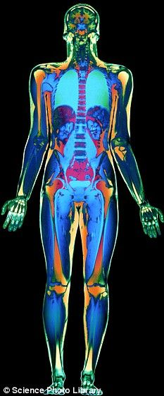 Scan of the human body