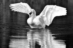 Like white swans' wings by Sofia Kioroglou