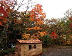 小屋と紅葉。10月下旬から11月上旬は紅葉の季節。