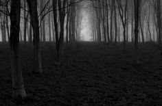 Chris Friel is a photographer with a wonderful, natural eye - a modern day Faye Godwin perhaps. His photography is instinctive & refreshing for it. Camera Movements, Natural Eyes, Shutter Speed, Landscape Photographers, Abstract Landscape, Decay, British, Trees, Cold