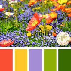 palette de couleur 12