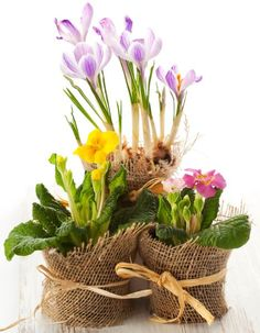 Find Colorful Spring Flowers Pots stock images in HD and millions of other royalty-free stock photos, illustrations and vectors in the Shutterstock collection. Thousands of new, high-quality pictures added every day. Spring Flowers, Flower Pots, Photo Editing, Royalty Free Stock Photos, Nature, Plants, Image, Colorful, Design