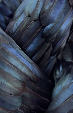 feathers feathers feathers