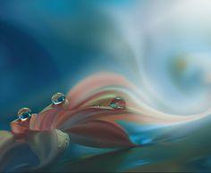 Harmony of Feelings... by Juliana Nan