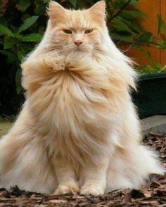 Oh. #zsazsabellagio #cute#cat