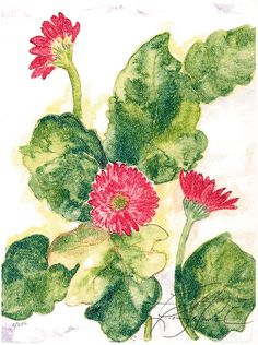 Gerbers.watercolor L.Stilnovich  All of my art, my mom Kay encouraged , she is also the business side of my art. I wouldn't even paint if it was not  for her.  Ive been painitng 34 yrs now. Thanks ma<3