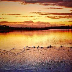 Dusk at Lake Samsonvale... . #amazingsky #flocktogether #lumixlife #discoverbrisbane #vision