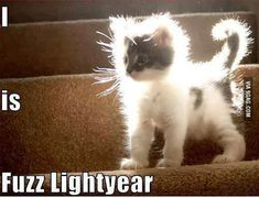 These cute kittens will bring you joy. Cats are awesome companions. Funny Animal Quotes, Funny Animal Pictures, Animal Memes, Cute Pictures, Funny Animal Humor, Cute Animals With Funny Captions, Animal Captions, Funny Pictures With Captions, Animal Pics