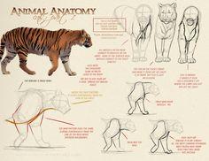 Animal_Anatomy___Cats_Part_1_by_akeli.jpg (1400×1082)