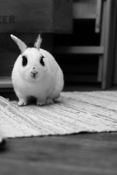 Bunny Showdown - September 7, 2011