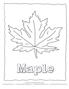Pictures of Maple Leaves to Color
