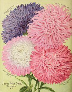 Vick's garden & floral guide