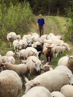 Hemsedal Norway Norway, Travel, Animals, Viajes, Animales, Animaux, Destinations, Animal, Traveling