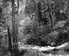 Ansel Adams, Tenaya Creek, Spring Rain
