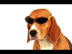 Nice Clothes For The Cute Beagle Dog 2016 - YouTube