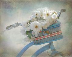ljenf:    bitznpieces:  my bike (by Lolas Lollabout)