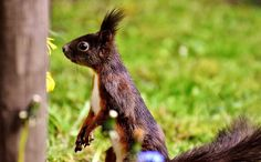 Esquilo, Nager, Natureza, Fechar