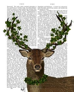 The Green King Deer Stag   Antiquarian Book Print   FabFunky – Lush Labels