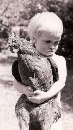 This is adorable! When my mother was a child she played with chickens 🐓as if they were baby dolls. Chickens And Roosters, Pet Chickens, Raising Chickens, Chickens Backyard, Farm Animals, Cute Animals, Tier Fotos, Vintage Pictures, Vintage Photographs