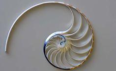 http://www.henrydomke.com/lightbox/index.php?module=media=102=40=gallery/Shells=105