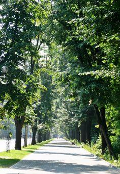 Iasi, Romania Visit Romania, Missing Home, Places To Visit, Country, Interior, Travel, Life, Beautiful, Romania