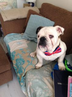 Please help – my dog went missing early yesterday morning from Leeds. He is a male bulldog who is micro-chipped, the police have been notified. Please make him too hot to handle and hopefully I can get him back home. There are 3 very upset children desperately missing their buddy, thanks for helping x