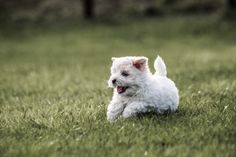 """Catch me if you can ! Puppies, Canning, Dogs, Animals, Animales, Puppys, Animaux, Pet Dogs, Doggies"
