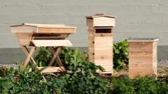 Artisanal trend-setter Portland is rolling out stylish condos for backyard bees