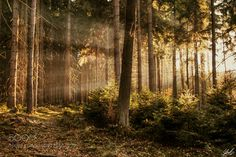 Last lights of the day by EmilioLBC. Please Like http://fb.me/go4photos and Follow @go4fotos Thank You. :-)