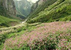 Valley Of Flowers, Uttaranchal-India