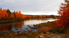 Ruskaa Rovaniemellä 15. syyskuuta 2013. Lukijan kuva: Pirjo Satta Kuva: Pirjo Satta. Fall Photos, Nature Photos, Lapland Finland, Lappland, Scandinavian Countries, Autumn Lights, Natural Beauty, Tourism, Beautiful Places