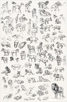 collagepdx: drawing 101: animals.