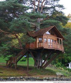 Stunning Tree Houses