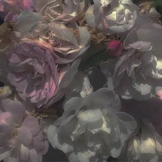 Flower Aesthetic, Aesthetic Photo, Aesthetic Pictures, No Rain, Narnia, My Flower, Faeries, Foto E Video, Aesthetic Wallpapers