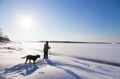 Fancy skiing between islands in the Turku Archipelago? Archipelago, Islands, Skiing, Trail, Fancy, Mountains, Dogs, Nature, Ski