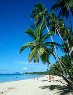 Martinique, possibly where I will be on my 50th birthday!!