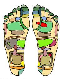 De voetreflexologie of reflexzonetherapie is een pseudowetenschappelijke alternatieve geneeswijze die ervan uit gaat dat alle organen en lichaamsdelen in verbinding staan met plaatsen op de voeten (Wikipedia).  http://www.dedragendenatuur.nl http://nl.wikipedia.org/wiki/Reflexologie
