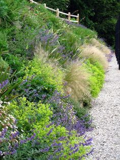 Grasses and perennials smother a hot sunny bank