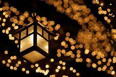 Hello Japan, Japan, Bright learning, Teneriffe, Ikuko Borg, language, calligraphy, shopping, currency