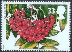 The Four Seasons. Autumn 33p Stamp (1993) Rowan