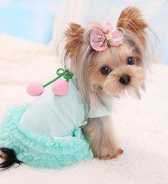 Omg adorable 💖💖💖