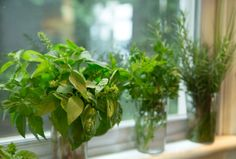 My Favorite Trick for Summer Herbs - how to have fresh herbs at your fingertips all summer long.