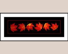 Maple Leaves Art Print 18X6 - Red Maple Leaves Autumn Colors - Pressed Leaf Art - Botanical Art Print - Black Background - Leaf Decor