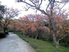 Palampur tea Garden: Himachal Pradesh @ Aneet
