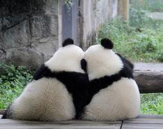 13.9 тыс. отметок «Нравится», 412 комментариев — Panda Vibes (@panda_vibes) в Instagram: «Tag your best friend! »