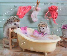 Hidden Secret Life of Hedgehogs by Elena Eremina, http://inspiredvox.com/hedgehogs-secret-life/  Check more at http://inspiredvox.com/hedgehogs-secret-life/