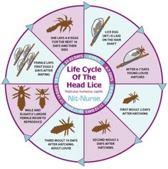 Head lice treatment.. .school is starting soon :(